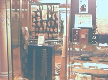Shell Fossils. Paleontology in Museum of life. Saragossa (Zaragoza) 9