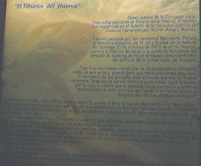 Fishes. Huerva shark. Paleontology in Museum of life. Saragossa (Zaragoza). 11